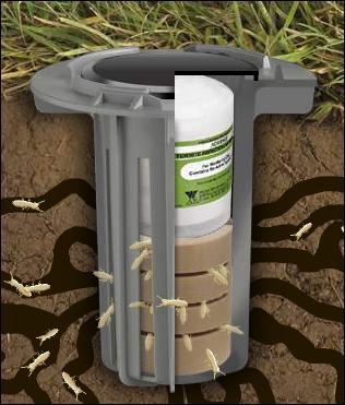 subterranean termites swarmers